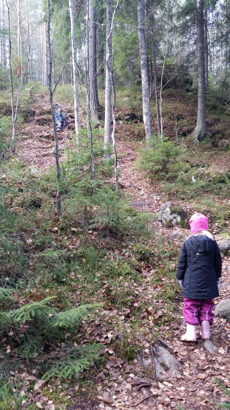Nuuksion Saarijärveltä löytyy Espoon korkein kohta