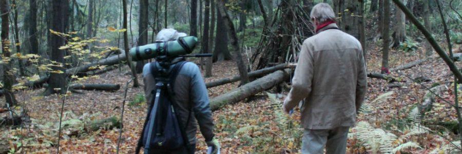 Kivinokan vanhan metsän suojelu etenee