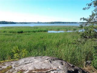 Kivinokan vanha metsä suojellaan